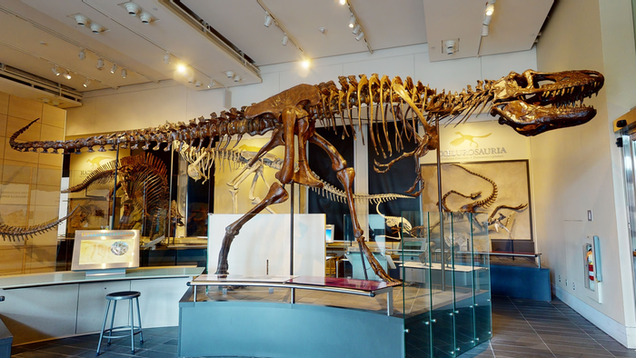 New Scans of Tyrannosaur Skulls Reveal Echoes of Dino Brains