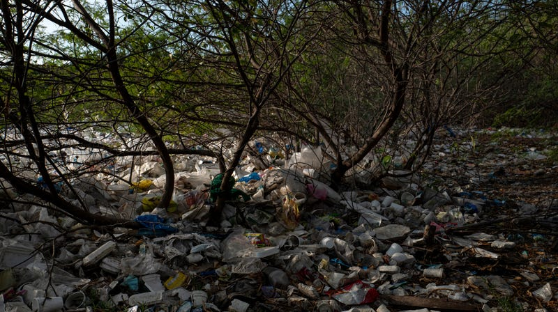 Mangroves full of plastic garbage in the Philippines.