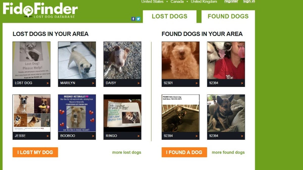 How to Find a Lost Dog or Cat