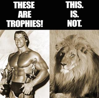 Illustration for article titled Ezek trófeák, ez viszont nem trófea, állapította meg Arnold
