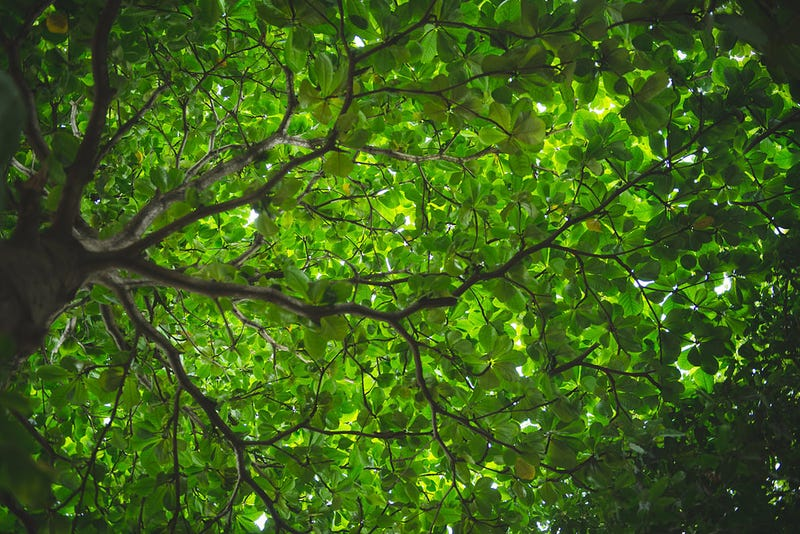 Heroic Plants Are Working Overtime to Gobble Up Our Carbon Emissions