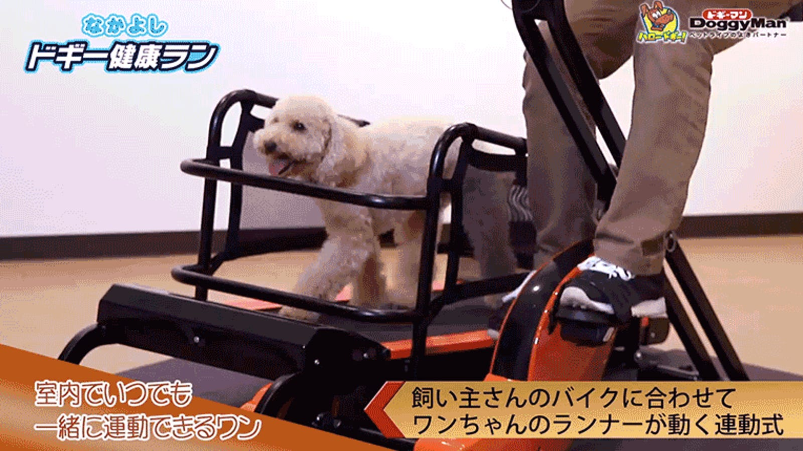 Pedalling This Exercise Bike Gives Your Dog a Workout Too