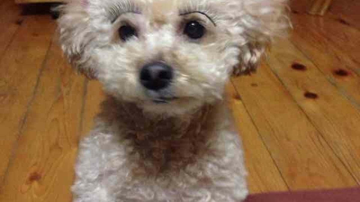 Fake Eyelashes On Pets Might Be A Thing