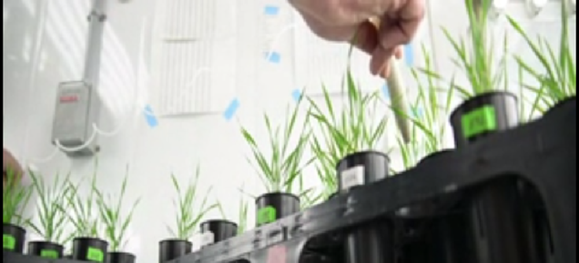 Biologists Say Breeding Better Soil Microbes Can Help Grow Bigger Plants