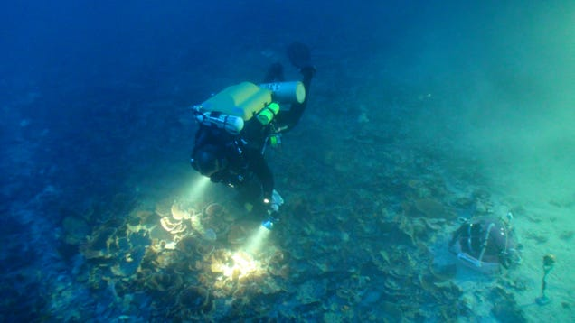 A scientist explores a mesophytic reef.