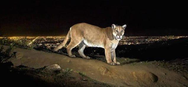 Wie wilde Tiere und Städte sich aneinander anpassen