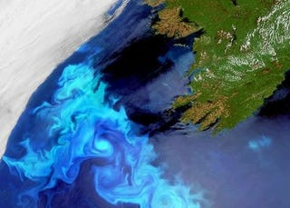 Illustration for article titled The ferocious blooms of Ireland's plankton are visible from space