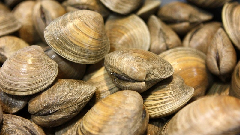 The Easiest Way To Shuck A Bunch Of Clams At Once