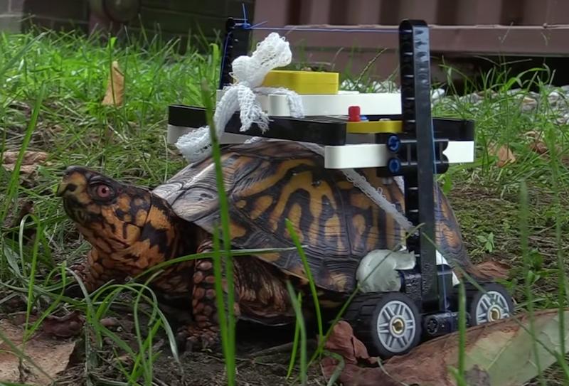 Este tortuga puede caminar gracias a una silla de ruedas de LEGO.