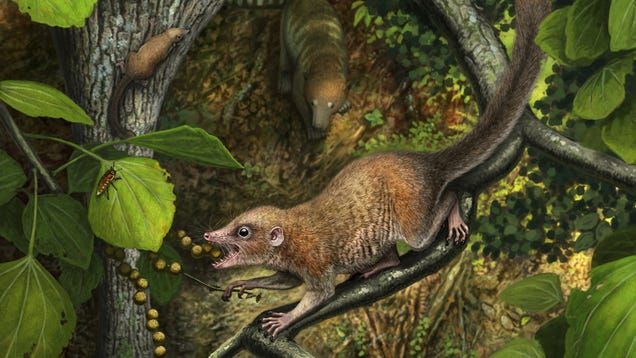 Primates Appeared Almost Immediately After Dinosaurs Went Extinct, New Research Suggests