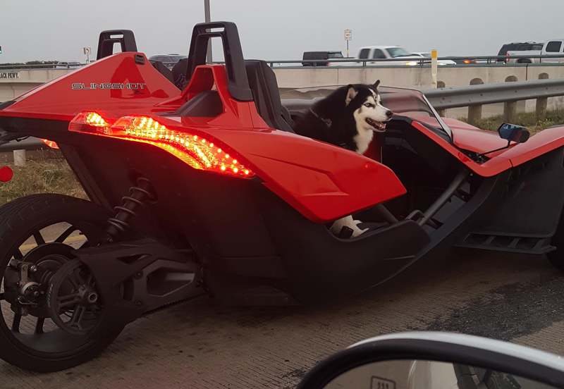 Illustration for article titled It's the Middle of the Night. Here is a Photo of a Husky Riding in a Polaris Slingshot.