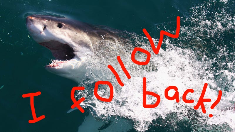 Illustration for article titled Now Sharks Can Tweet at You to Warn You They're Coming
