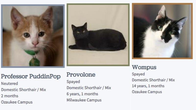 Wisconsin Humane Society Cat Names