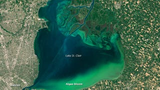 Illustration for article titled Algal Bloom is Turning the Great Lakes Green