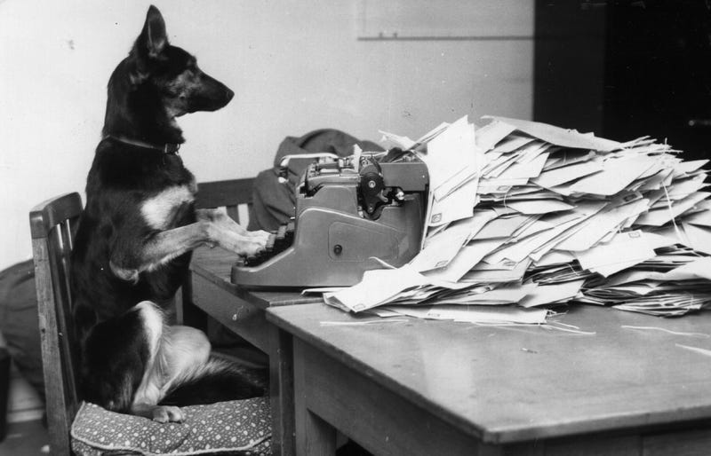 Petra, the Alsatian dog from the B.B.C's children's program Blue Peter answering her fan mail. (Photo: John Pratt/Getty Images)