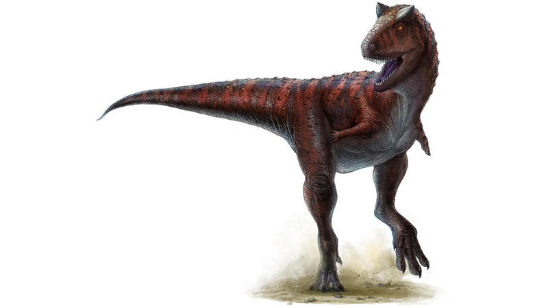 Footprints of an Abelisaurus have been uncovered in Bolivia. This creature closely resembled the Carnotaurus (pictured above). (Image: Lida Xing and Yi Liu)