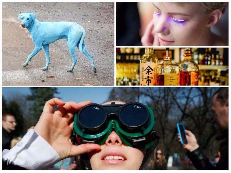 Illustration for article titled Gafas solares falsas, pestañas LED peligrosas, perros azules en la India. Lo mejor de la semana