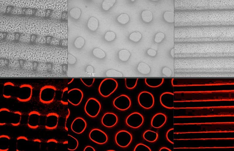 Illustration for article titled Diseñan un camuflaje que imita a la perfección la piel de los pulpos