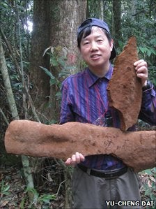 Illustration for article titled Tropical Chinese fungus weighs half a ton and covers an area of 30 feet