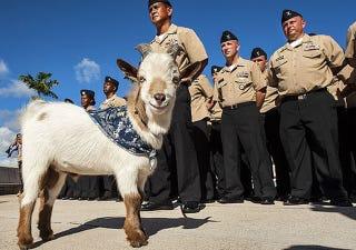 "Illustration for article titled Seafaring ""Salty Goat"" Sinks Navy Cruiser Captain's Career"