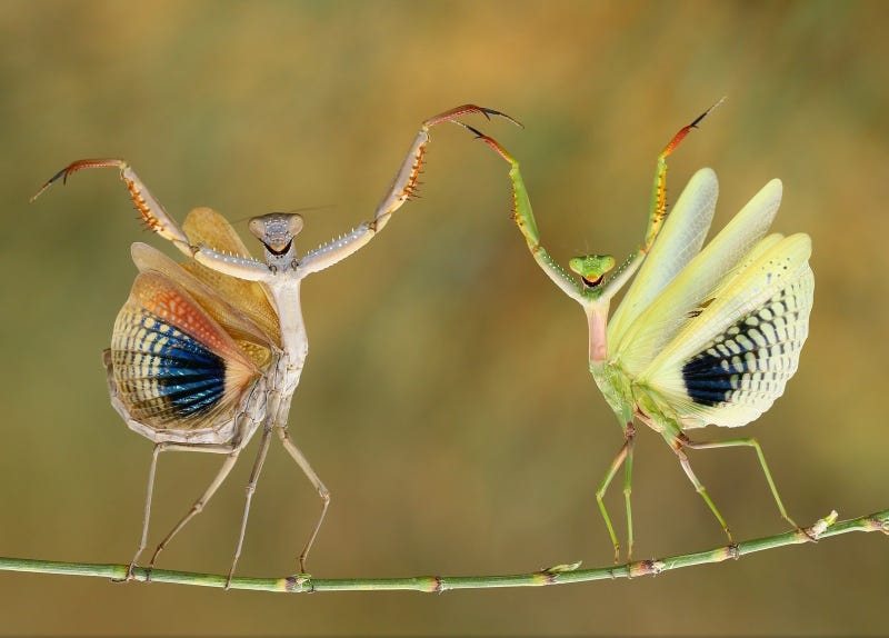 Illustration for article titled The best pictures from National Geographic's Photo Contest 2014