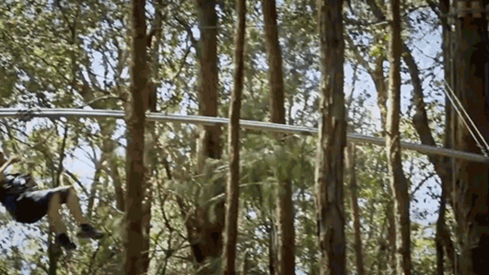 the world s longest zip line roller coaster looks terrifyingly awesome