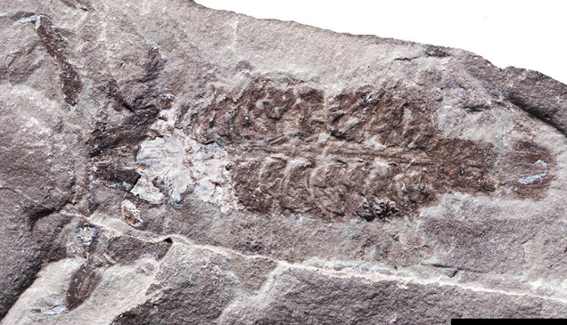 436-Million-Year-Old Scorpion Was Among the Planet s First Air Breathers