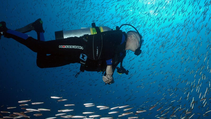A scuba diver swims among a school of fish at NOAA's Flower Garden Banks National Monument. Photo: NOAA Photo Library/Flickr