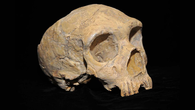 Study Suggests Early Humans Had Even More Interspecies Sex