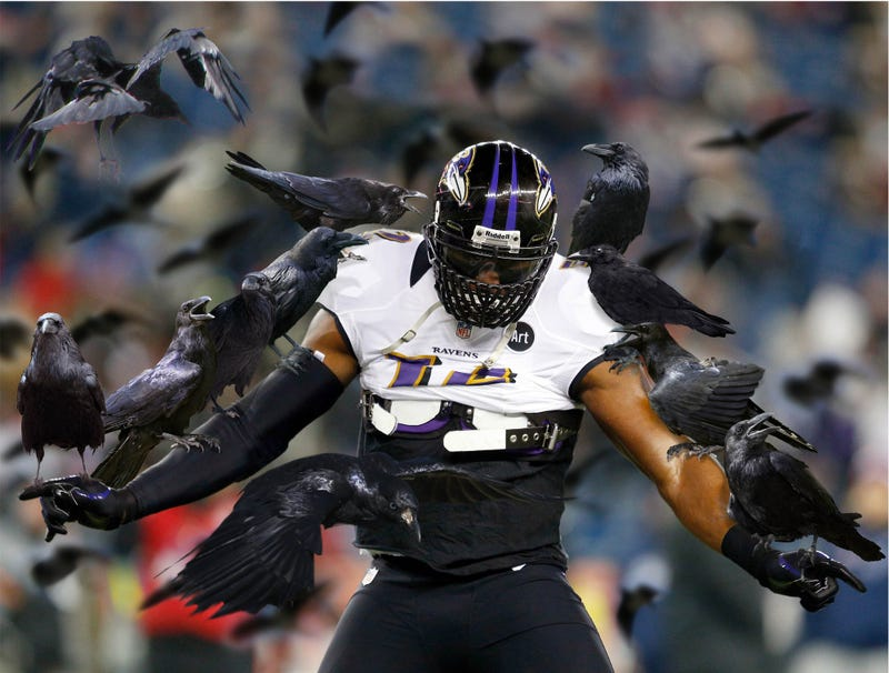 Illustration for article titled Ray Lewis Pregame Mating Dance Attracts Dozens Of Female Ravens