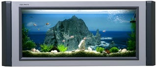 Illustration for article titled Wall Mounted Aquarium is the Next Best Thing to a TV