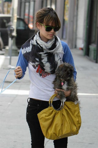 Illustration for article titled Rachel Bilson Gives Her Pooch A Lift