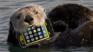 Illustration for article titled Zoo Incident Proves OtterBoxes Are No Match for Actual Otters