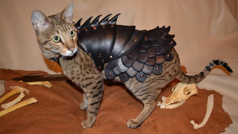 Illustration for article titled No Cat Is Complete Without A Set Of Leather Battle Armor