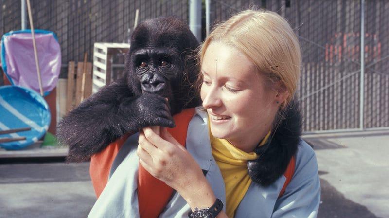 Koko when she was an infant.