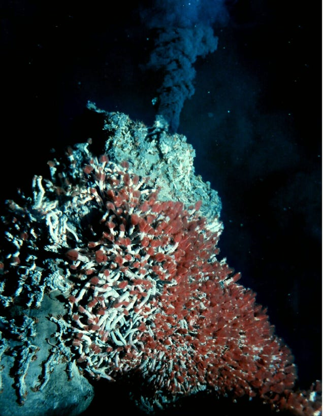 The Hunt for Undiscovered Drugs at the Bottom of the Sea