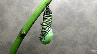 Video: The metamorphosis of a caterpillar into a monarch butterfly