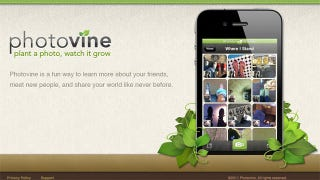 Illustration for article titled Google Photovine Lets You Create Social Photo Collections