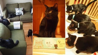 Illustration for article titled A Japanese Cat Cafe That Specializes in Black Cats