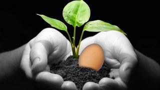 Illustration for article titled Keep Your Plants Healthier with Egg Shells and Hard-Boiled Egg Water