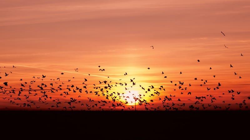 Illustration for article titled Mira cómo migran 118 especies de aves en esta animación del continente americano