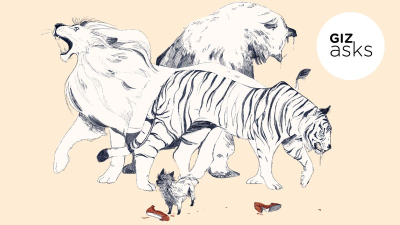 Illustration for article titled Which Animal Kills the Most Humans?