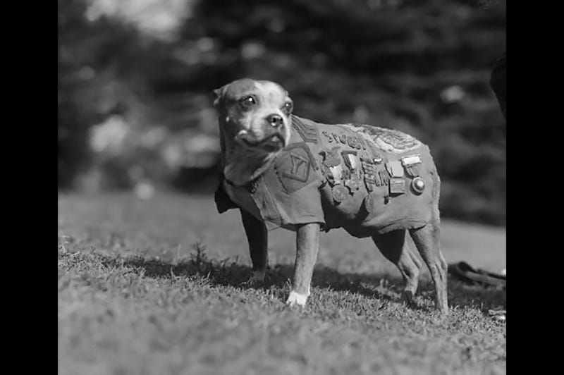 Illustration for article titled Sergeant Stubby