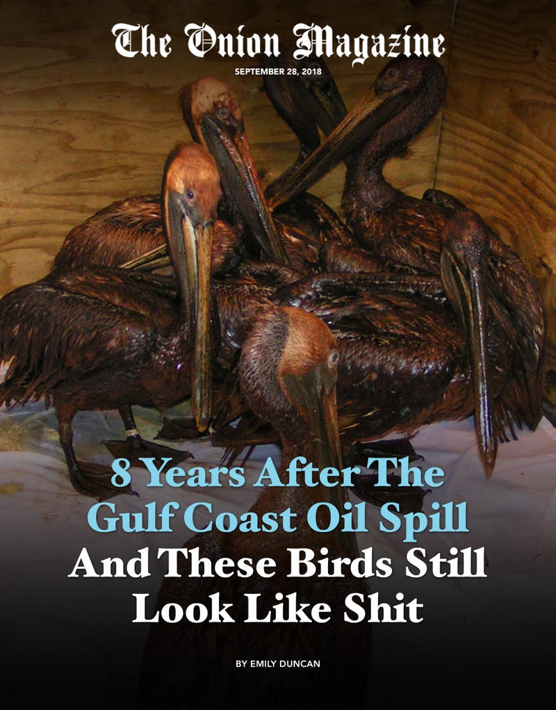 Illustration for article titled 8 Years After The Gulf Coast Oil Spill And These Birds Still Look Like Shit