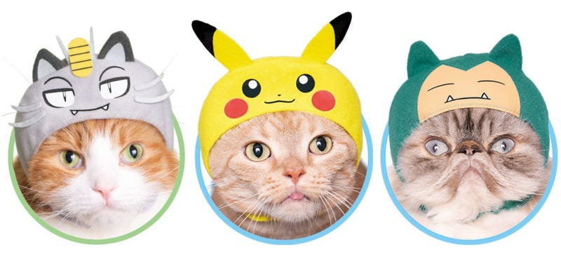 Illustration for article titled Pokémon Cosplay Has Gotten Easier For Cats