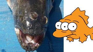 Illustration for article titled The Simpsons Called It: Three Eyed Fish Caught Outside a Nuclear Power Plant