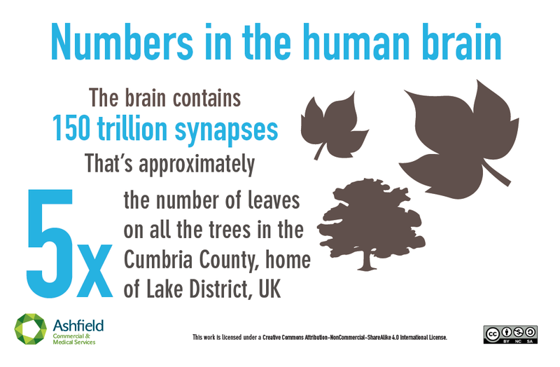 Illustration for article titled How Big Is The Brain? Here's Some Perspective.