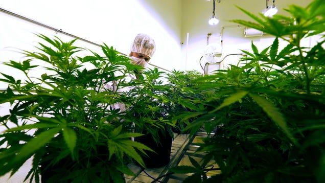 Texas House Overwhelmingly Passes Two Major Marijuana Reforms