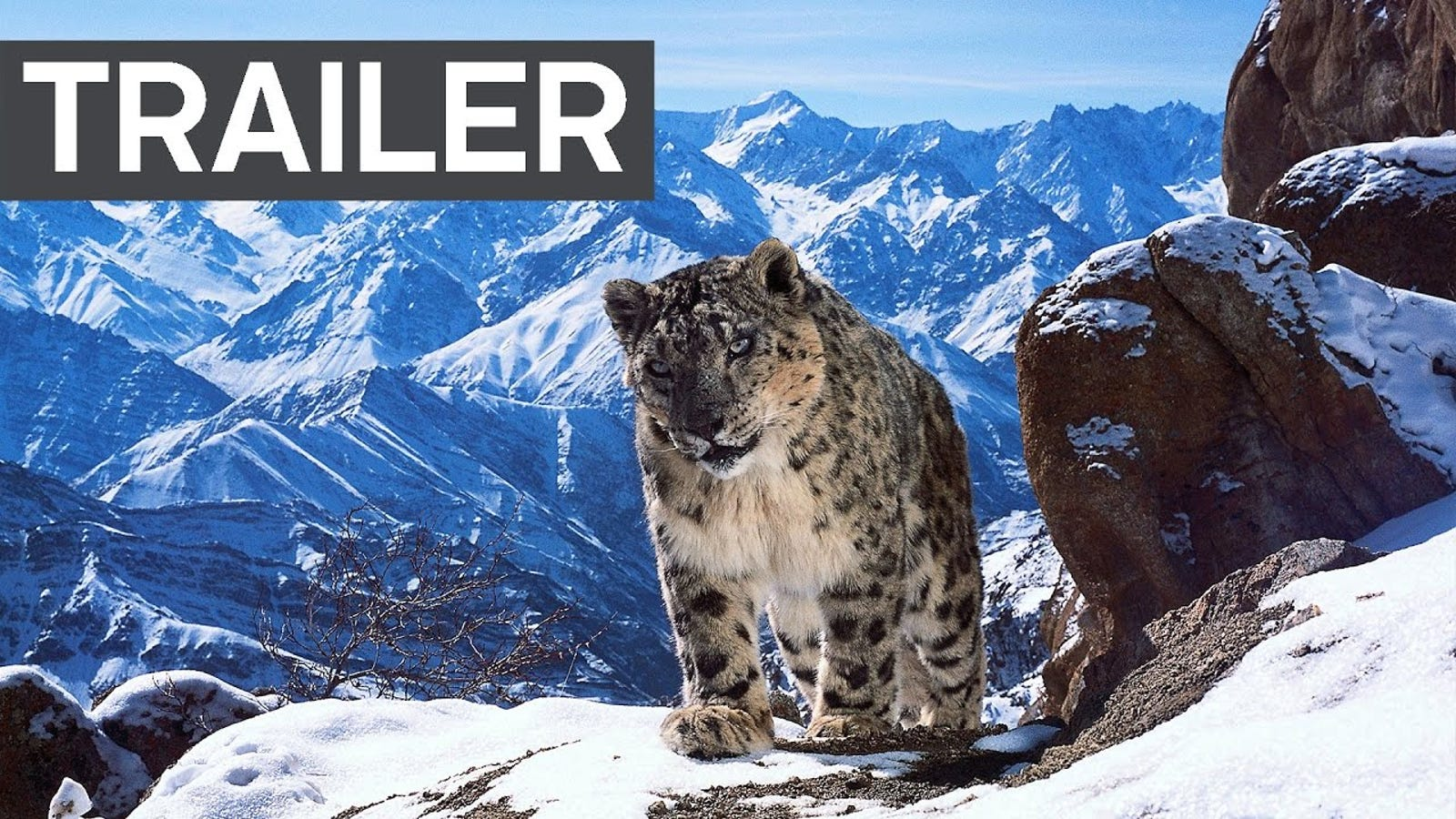 The Planet Earth II Trailer Is Just Incredible