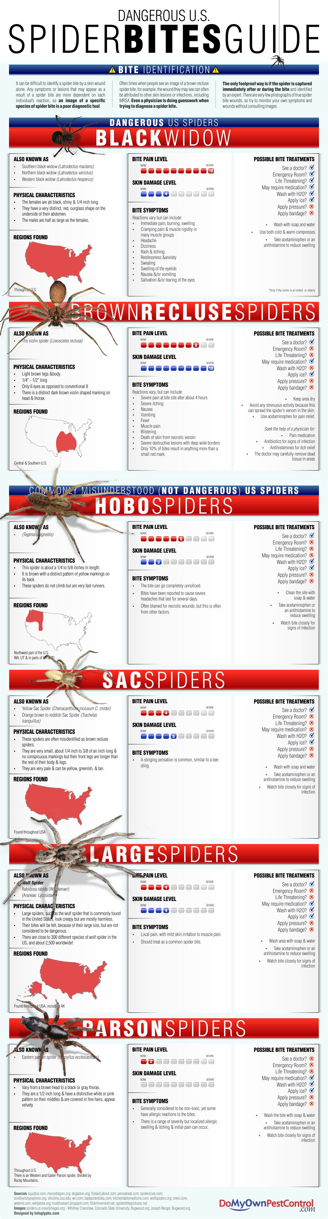 Identify Dangerous Spiders And Bite Symptoms With This